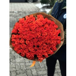 101 коралловая роза Вау 80 см