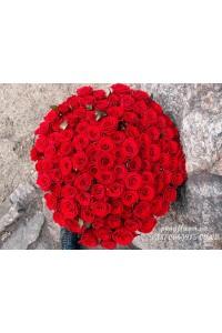 101 красная роза Гран При 60 см