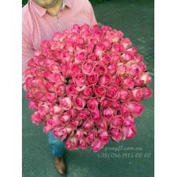101 розовая роза Канди 70 см