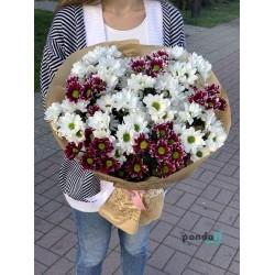11 хризантем
