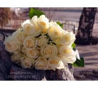 15 белых роз 90 см