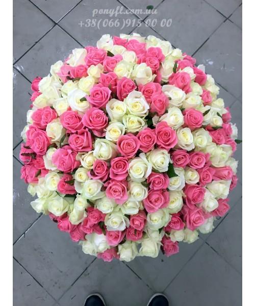 151 роза микс белых и розовых 70 см