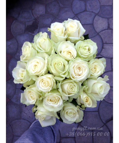 19 белых роз 60 см