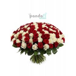 201 роза микс красных и белых
