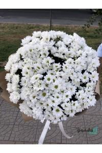 25 хризантем