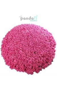 501 розовая роза
