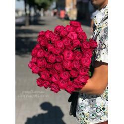 51 малиновая роза Шангрила 60 см