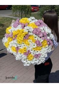 55 хризантем