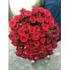 75 красных роз 80 см