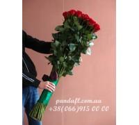 Голландская роза 150 см