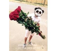 Роза 170 см