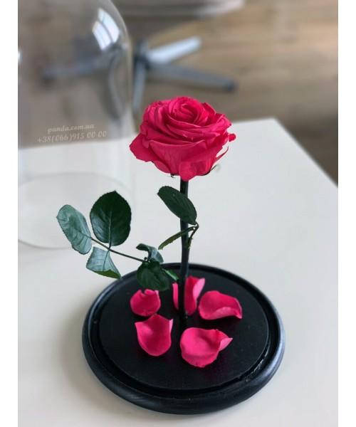 Малиновая роза в колбе