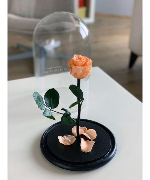 Персиковая роза в колбе