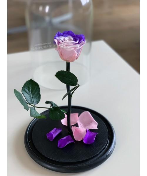 Радужная роза в колбе
